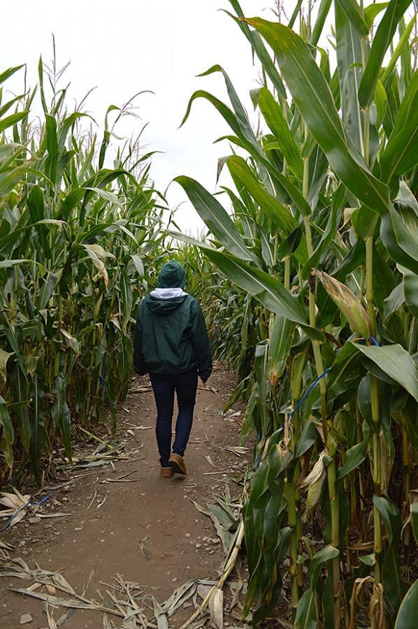 Junior medical imaging major Donya Forst gets lost in the mega corn maze.
