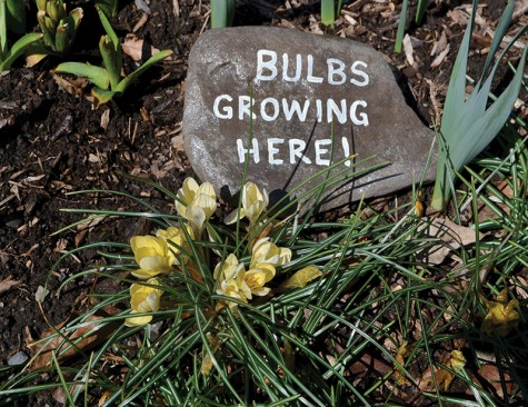 Flowers have started to bloom in a garden near the Delaware Water Gap. Rocks denoted where bulbs were growing so they were not stepped on.